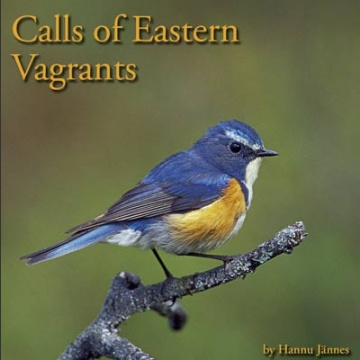 Calls of Eastern Vagrants; Jännes