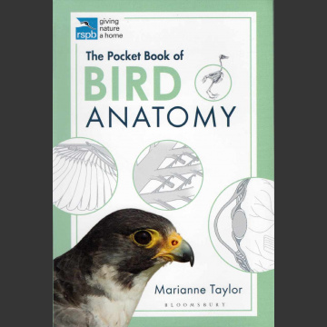 Bird Anatomy (Taylor, M. 2020)