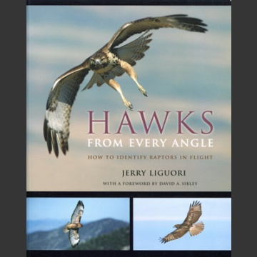 Hawks from every angle (Liguori, J. 2005)