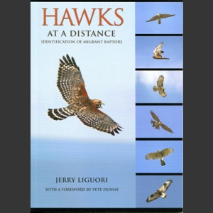 Hawks at distance (Liguori, J. 2011)