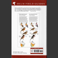 Field Guide to Birds of Eastern North America (Sibley, D. 2020)